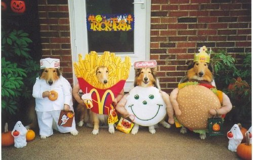 Halloween Animal Pictures, Animals in Costumes, Dogs in Customes ...